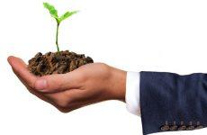 Питомник растений «Переделкино»