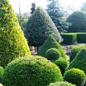 Особенности выбора и ухода за хвойными деревьями на участке