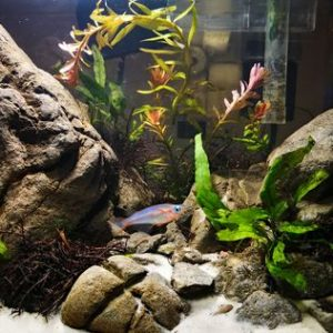 Важные аксессуары для ухода за аквариумом